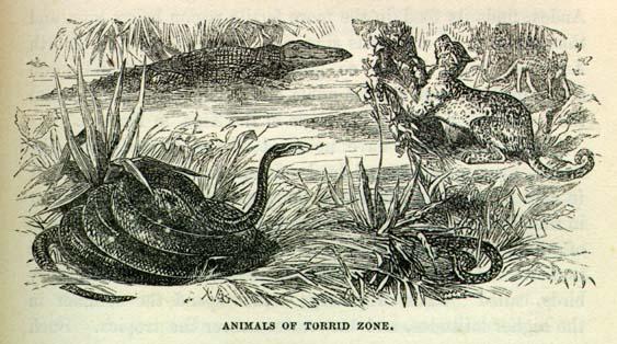 Torrid Zone Portuguese Water Dog ANIMALS OF TORRID ZONE