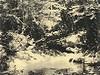 Gwyn's rhododendron Mountain stream