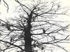 Strange Growth in Tree