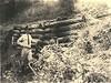 Log Cribbing and Check Dams for Erosion Control