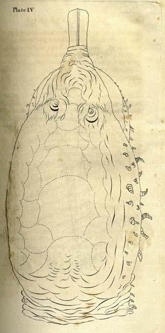 William Bartram, 1739-1823  Travels Through North & South Carolina