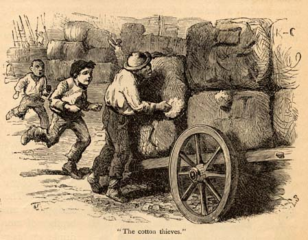 """""""The cotton thieves."""""""