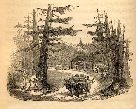 Frederick Law Olmsted, 1822-1903. A Journey in the Seaboard Slave ...