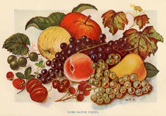 North Carolina Board Of Agriculture North Carolina And Its Resources